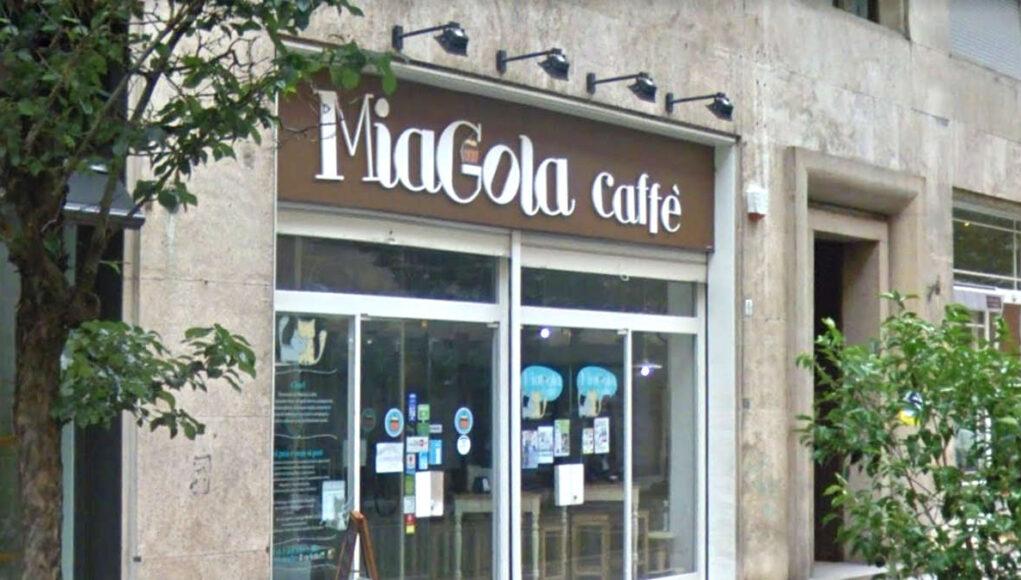 miagola caffe torino bar gatti